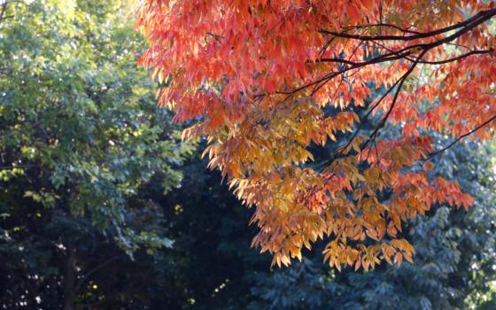 会場の大仙公園はちょうど紅葉を迎えていました。