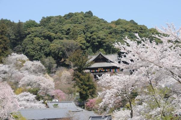 写真提供:一般財団法人 奈良県ビジターズビューロー