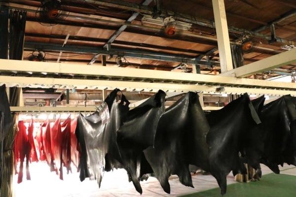 乾燥の工程。急激な乾燥は革を傷めるそうで、天井に何十台もの扇風機を設置して、ゆっくり乾燥させます