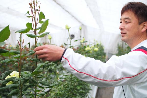 「悪くなった部分をカットしたらまた芽が出てきますよ」と東さん。思ったよりバラは背が高く、見上げるほどでした。