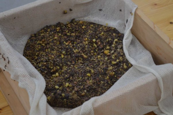 蒸したものを圧搾機で搾ったら、椿油の完成です
