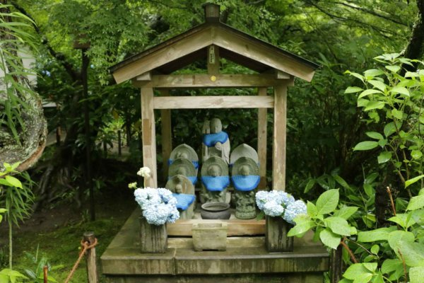紫陽花が見頃の鎌倉 明月院