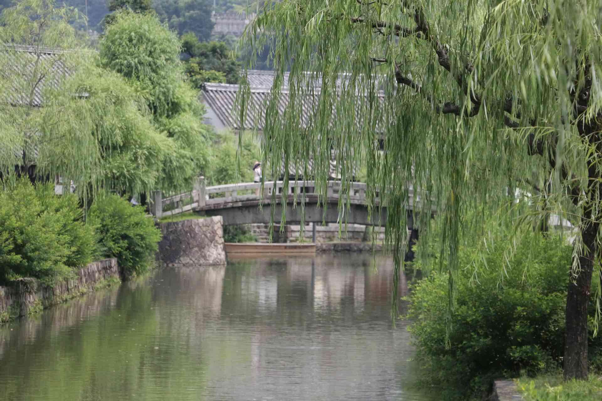 川沿いの柳並木
