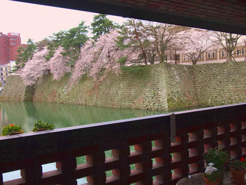 春にはお堀の桜を眺められる