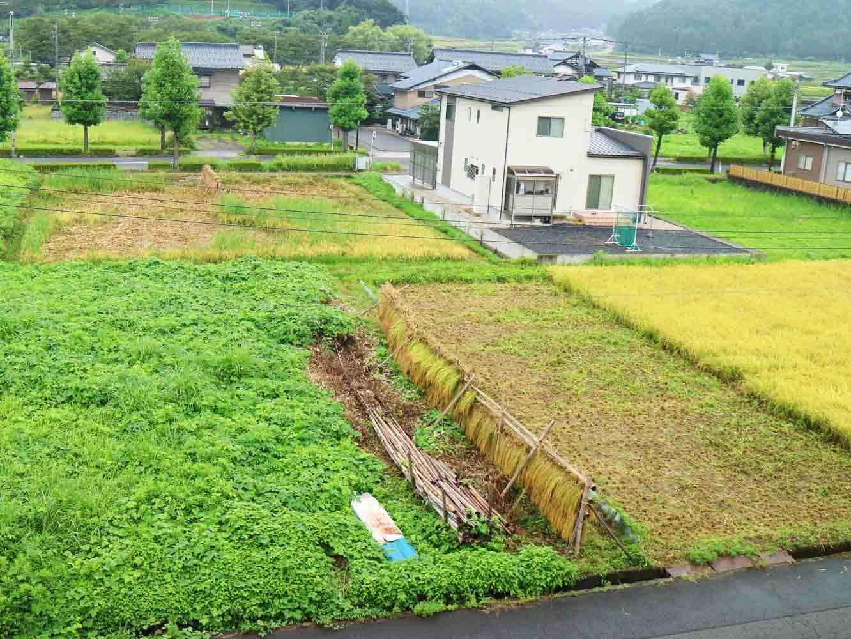 こちらは、学校の向かいにある田んぼ。前日に、学生ボランティアと一緒に4年生が稲刈りを行ったばかりでした