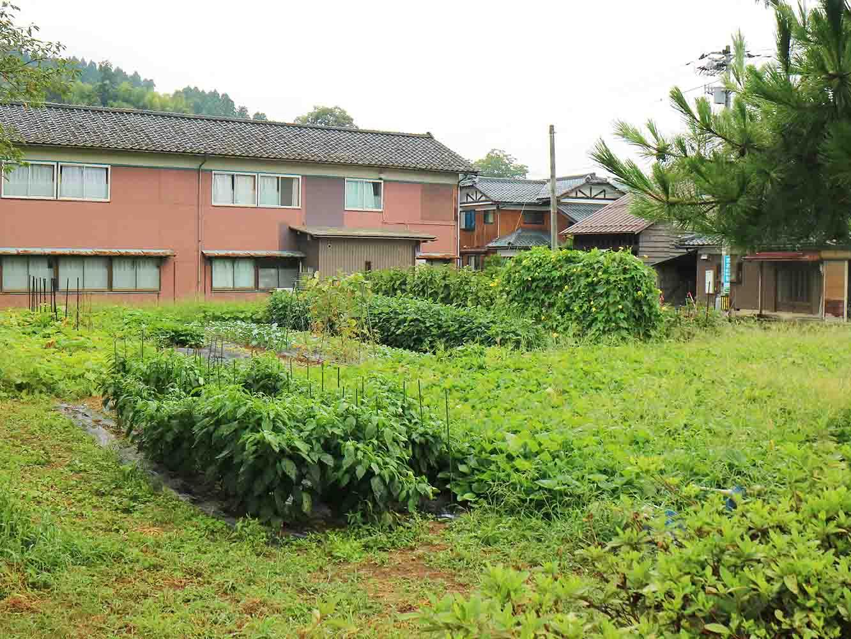 豊かに実った畑の様子。今年の河和田小学校の畑はとても順調で、すでにたくさんの収穫ができているそう。「畑仕事が上手な先生がいてくれると心強いんですよ」と上木先生がにっこりと教えてくださいました