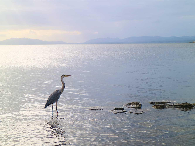 魚が多く生息するため、青鷺などの水鳥に出会うことも
