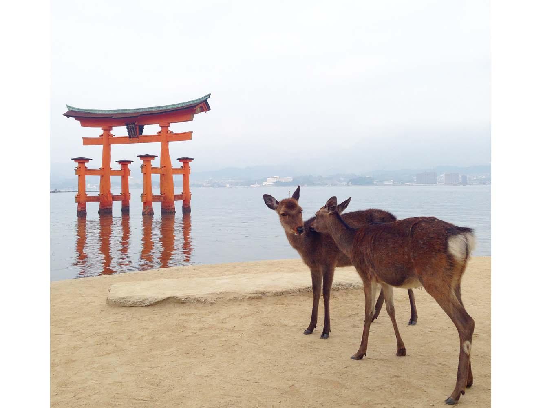 フェリーから降り立つと、鹿に迎えられる宮島。島全体が御神体とされる神域です。世界文化遺産に厳島神社が登録された現在は、海外からの観光客も多くなりました。