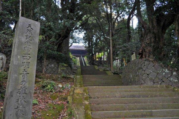 参道の両脇には天然記念物のシイの林が広がる
