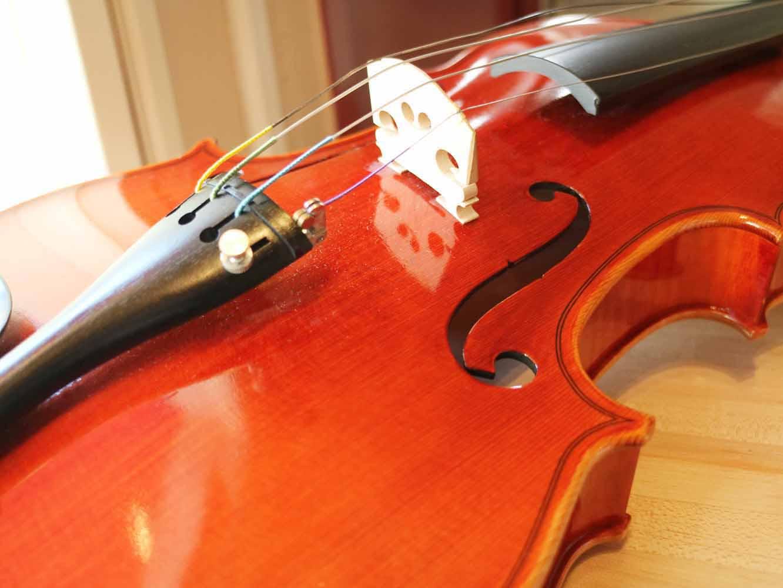 発想の元となったバイオリンの表面。カーブしたスプルスが使われています