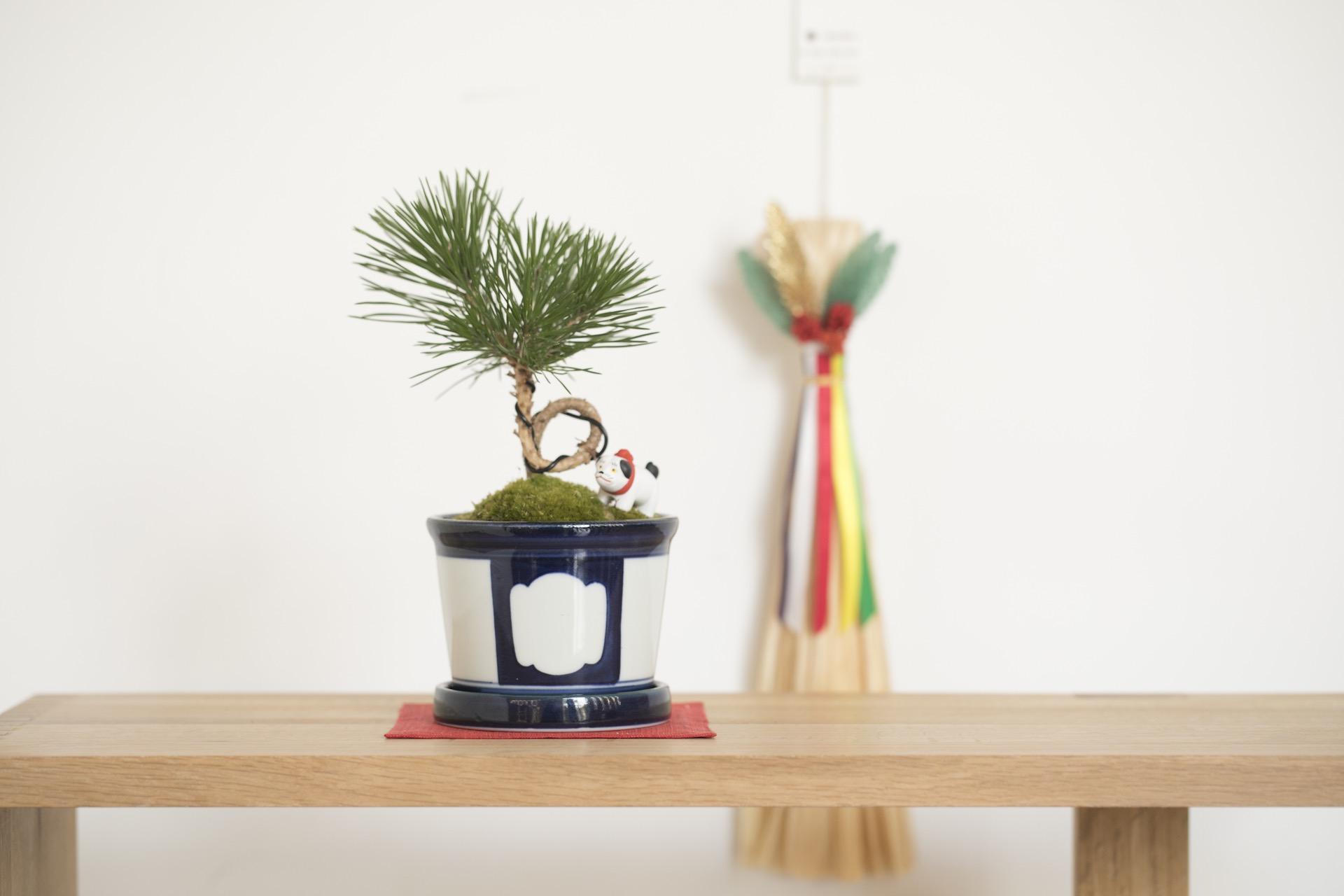 松の個性が新年を華やかに彩ります