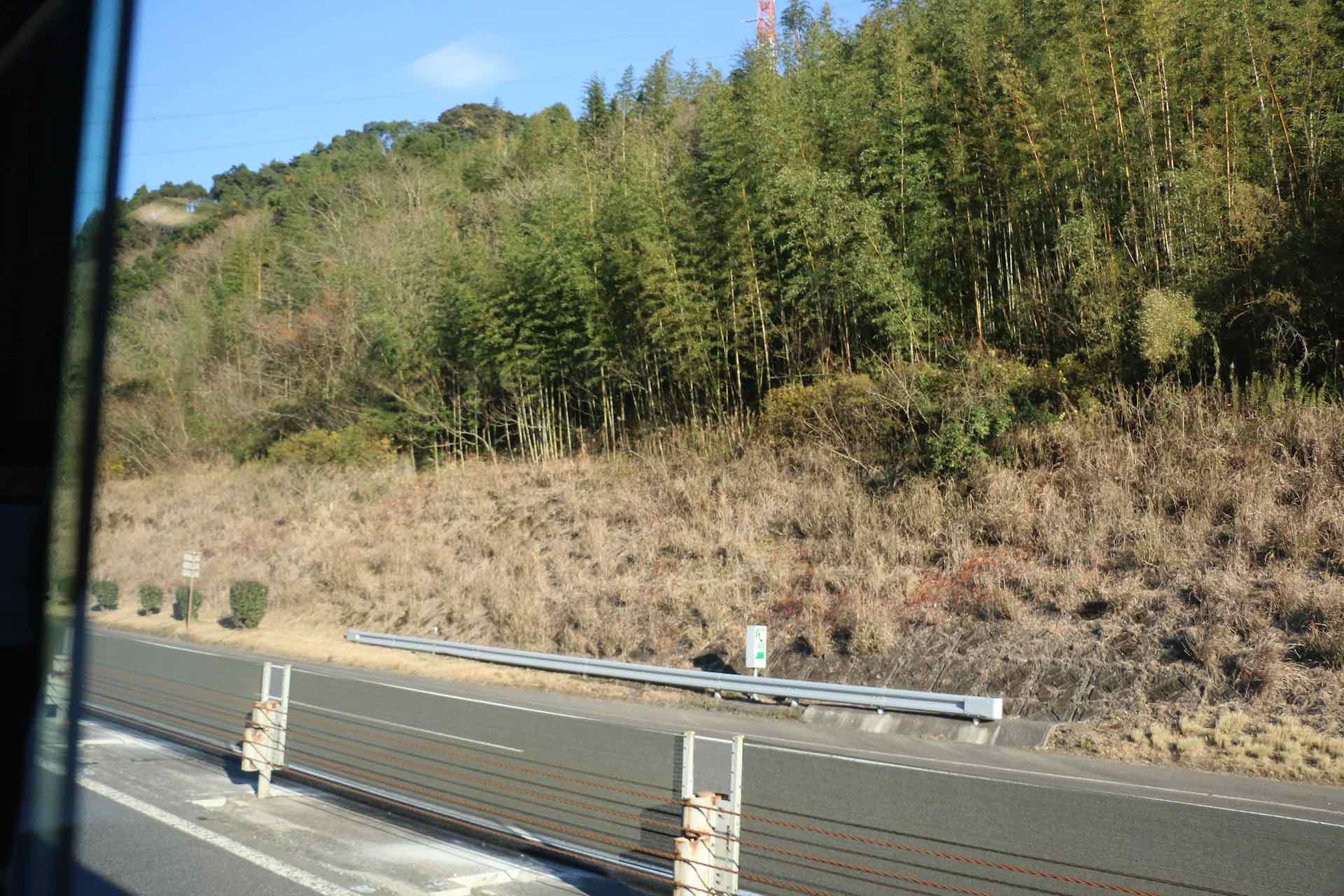 高速道路わきの竹林