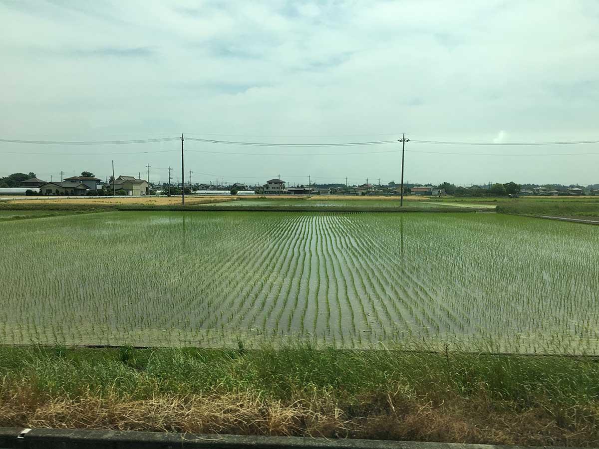 栃木の水田の景色