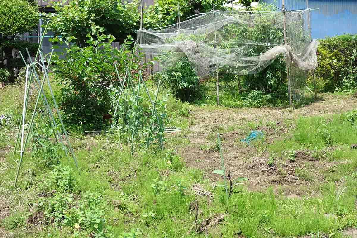 緑豊かな自家農園