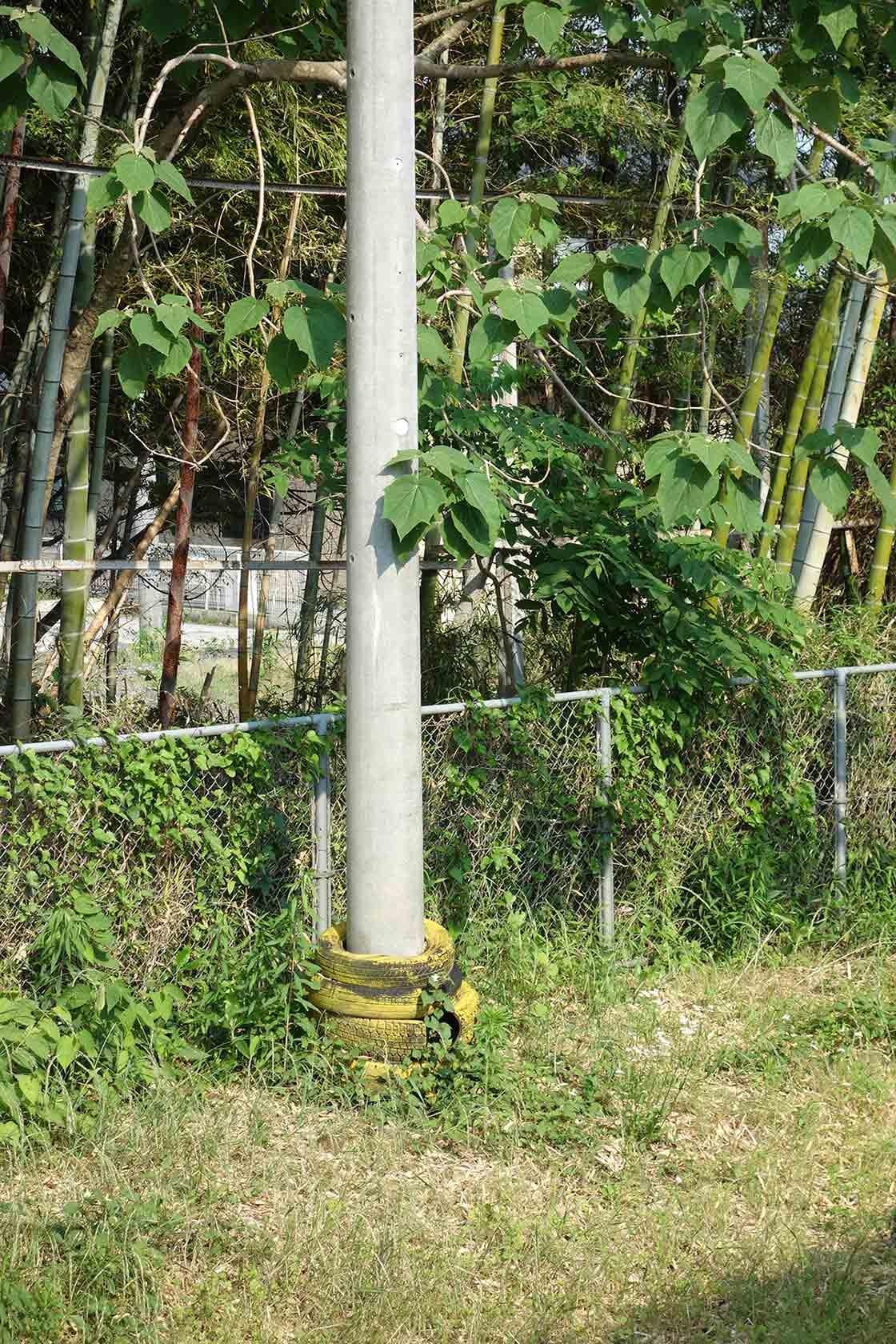 電信柱に巻きついた布とツタ植物