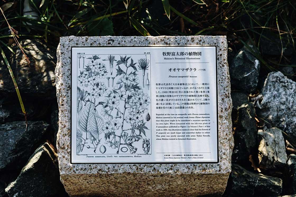 園内にも「牧野式」植物図の解説板が立つ