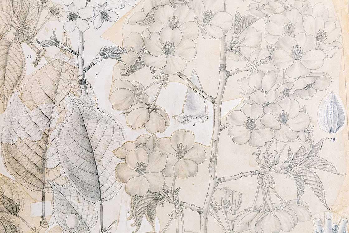 花の生涯を絶妙な筆さばきでかき分ける