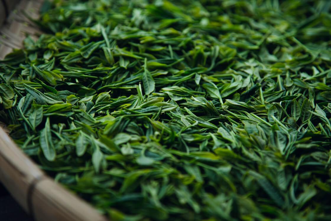 嬉野 松尾製茶工場・松尾俊一さんのお茶
