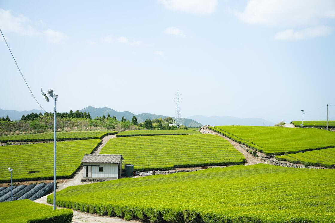 嬉野 絶景茶房