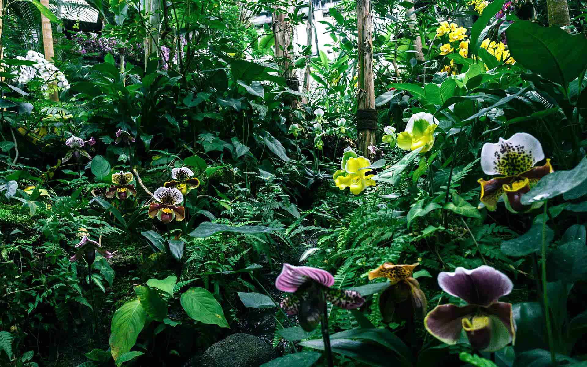 """何はともあれ、牧野植物園へ行こう。""""植物愛""""が深まる高知の名所へ"""