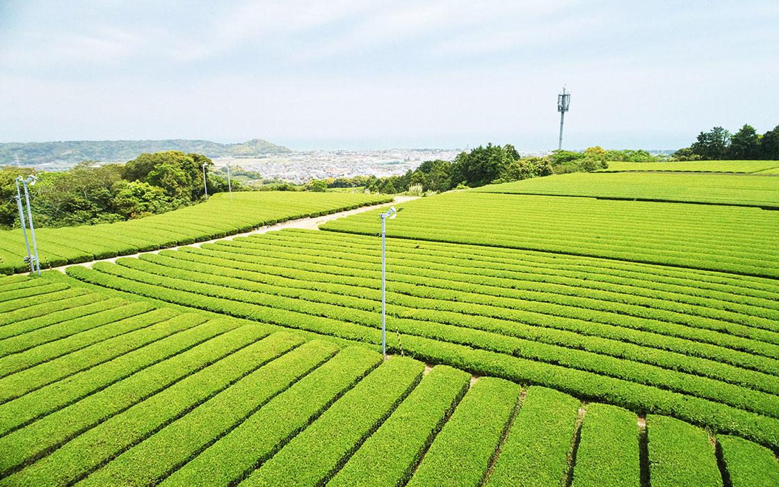 静岡のカネ十農園が表参道店をオープン