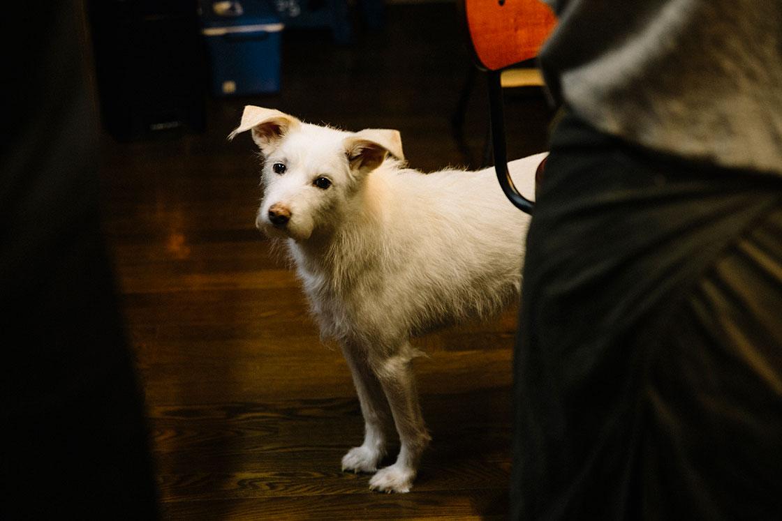 長瀬渉さんの愛犬ムーア