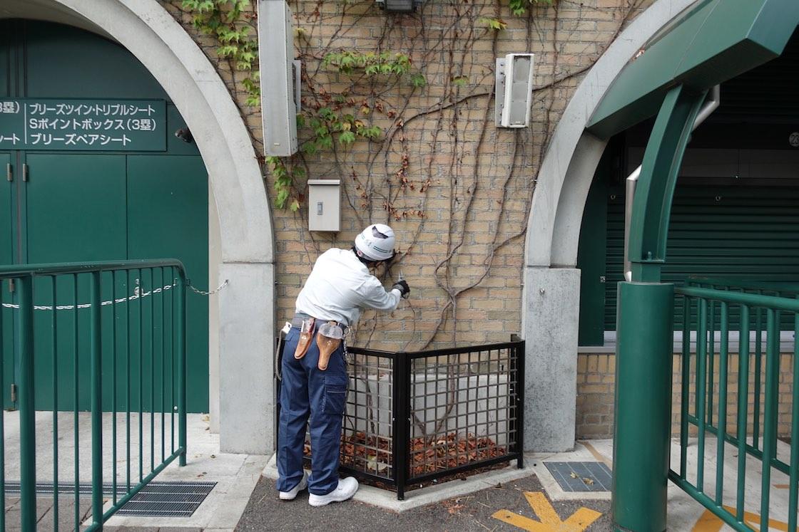 甲子園球場、ツタの壁