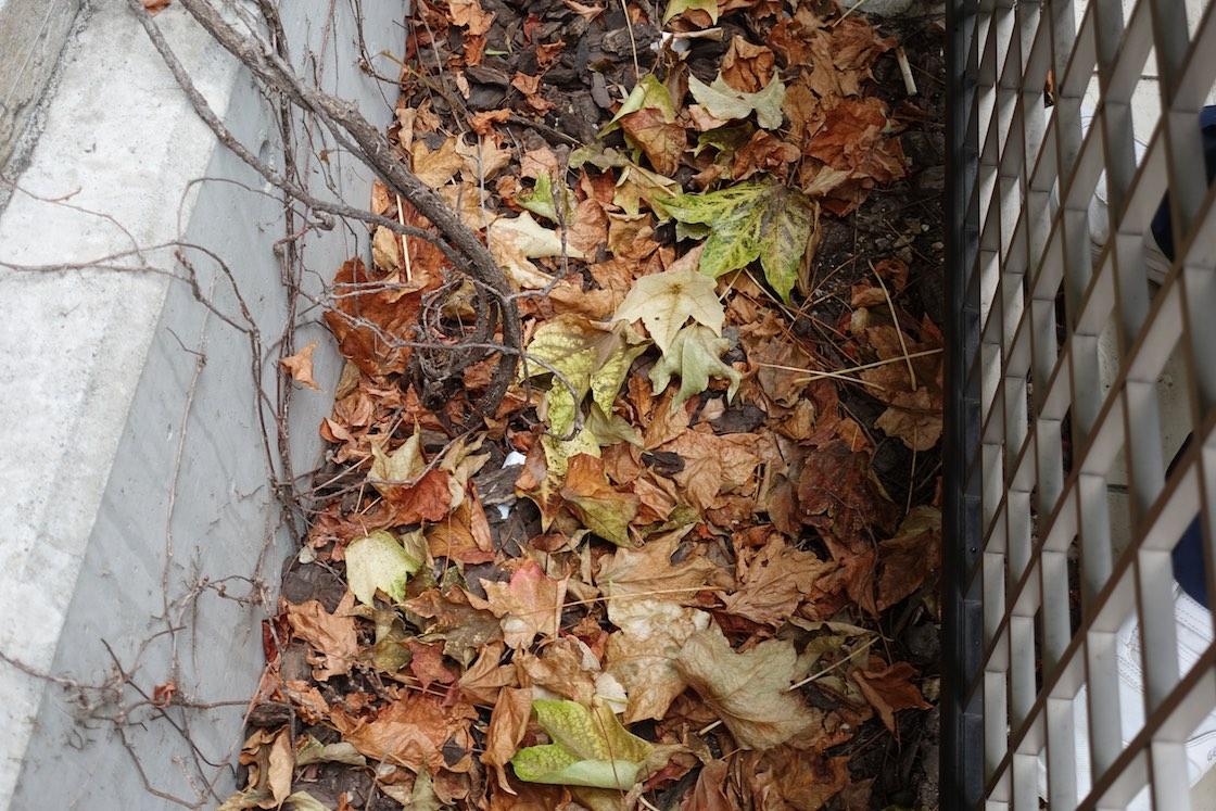 足元には摘まれた葉っぱが。そのまま腐葉土として土の栄養になる