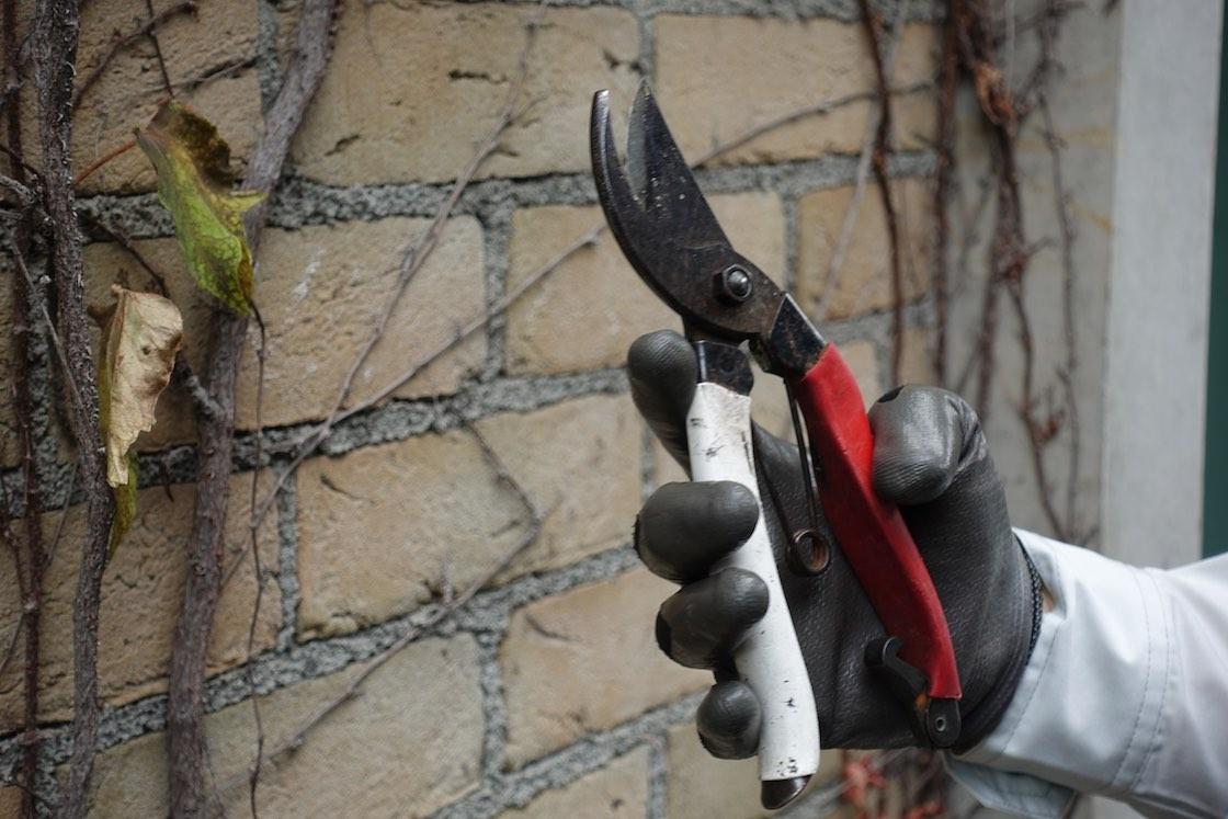 枯れた太い茎などには剪定ばさみを使用。場所によって道具を使い分けています