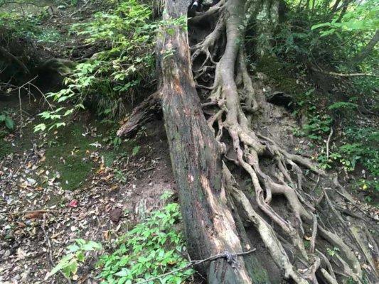 立派な木の根元