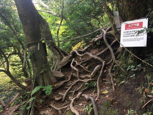 根が広がっている