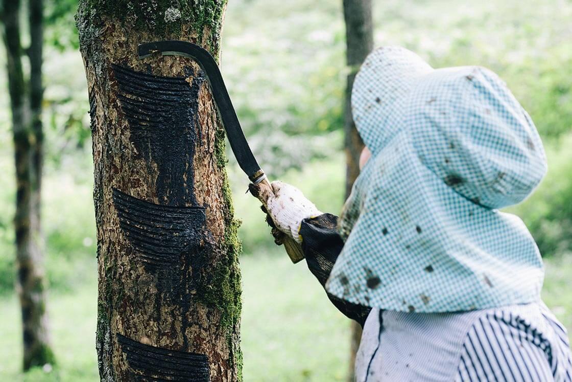 「カンナ」で横一線に細い傷をつけて、樹液を出やすくするために「メサシ」で切り込みを入れたり、入れなかったり。