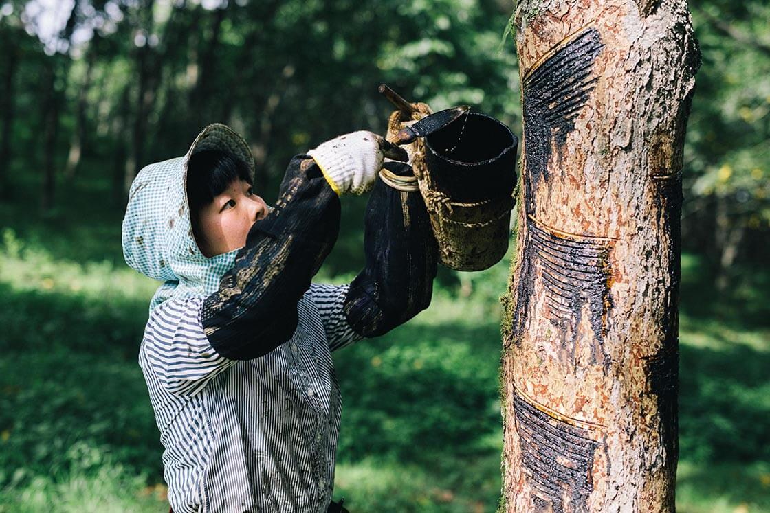 ヘラで掻き取った漆は「タカッポ」と呼ばれる漆樽へ
