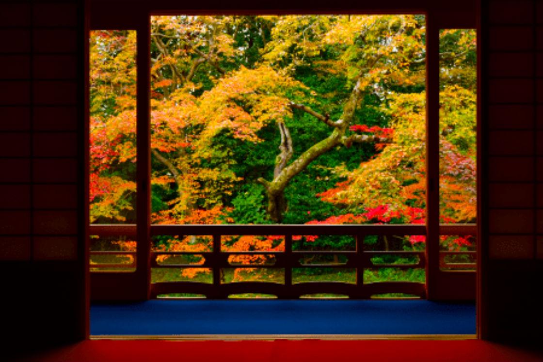 金閣寺、銀閣寺とともに臨済宗大本山相国寺の山外塔頭 (さんがいたっちゅう。本山の敷地外にある子院) を成す眞如寺 (しんにょじ) 。京都市にあり、五山十刹のうち十刹のひとつに数えられた古刹です