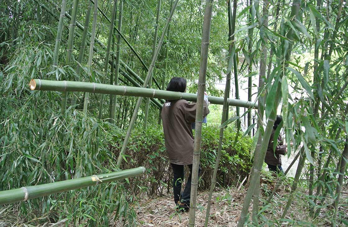 竹工芸専攻で使う竹を採取する学生