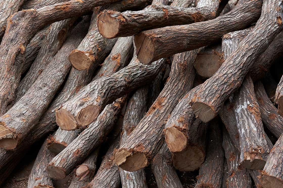 長さも太さも違う原木たち。窯に入れるために整える必要がある