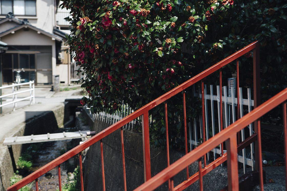 奥の植木の花とお似合いの赤い橋