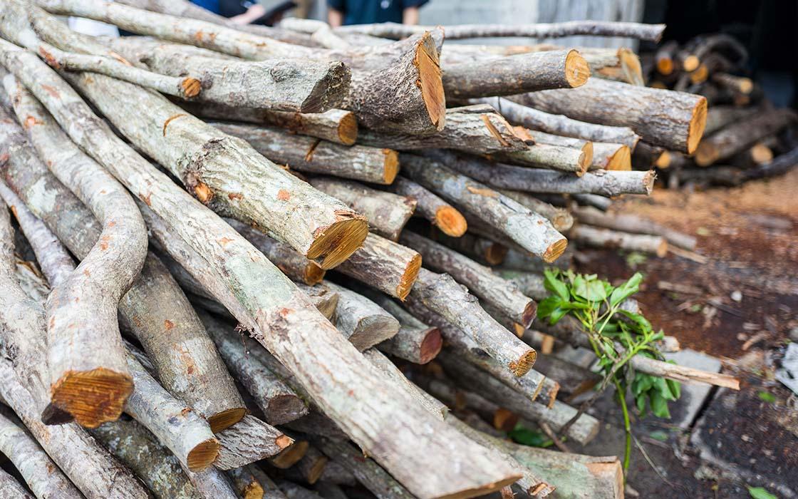 工房の横に積み上げられていた車輪梅という木