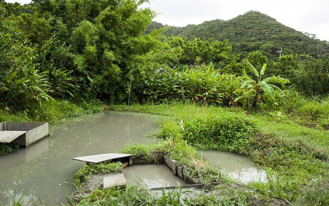 工房の裏手に設えられた天然の染め場である泥田