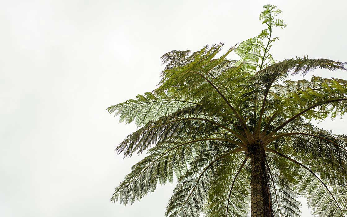 奄美大島に生える木