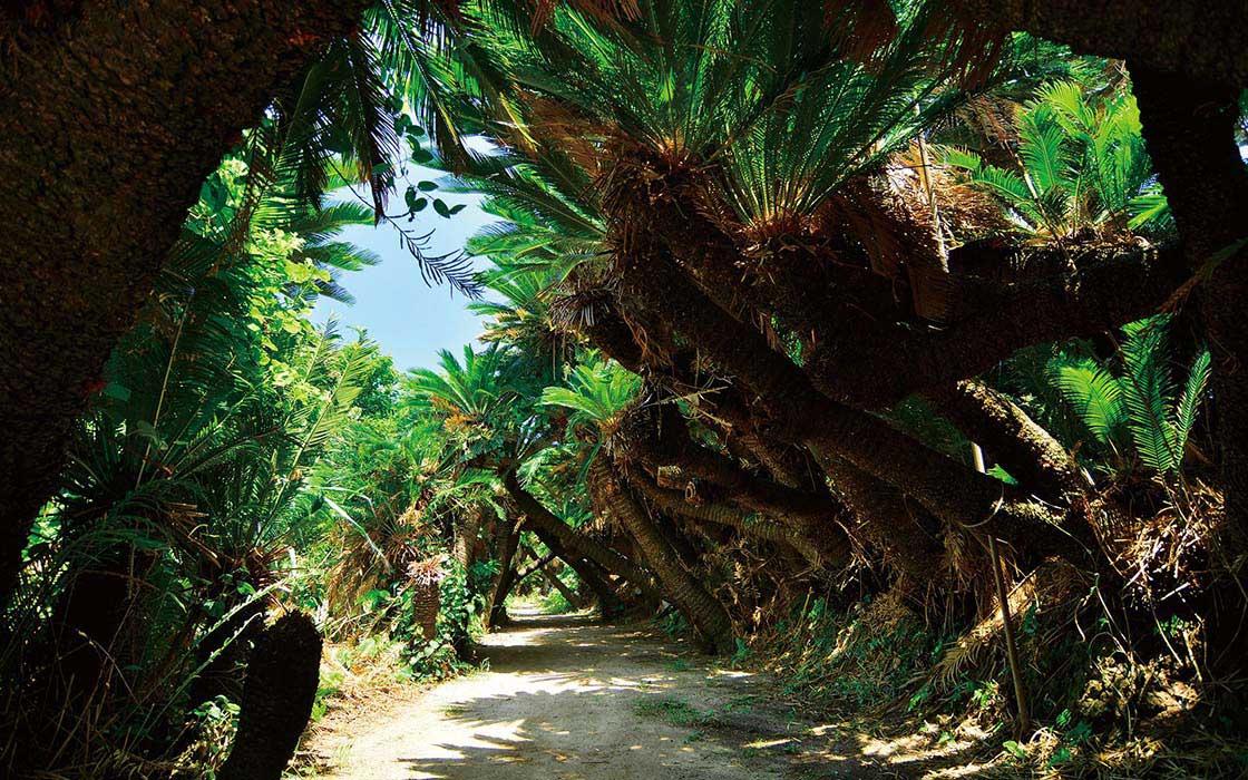 南国特有の植生はもとより、手つかずの原生林が多く残る奄美大島