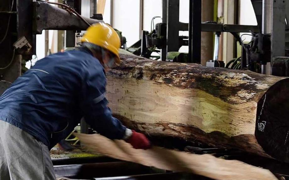 迫力の原木解体ショーを目の前で!里山を守る製材屋さんの倉庫参観日が6月1日・2日に開催