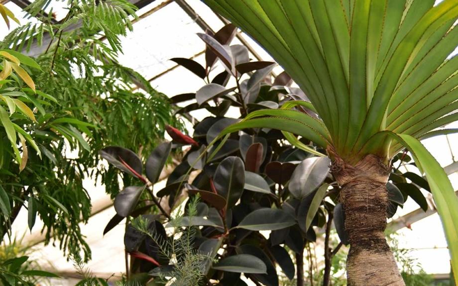 HAY TOKYOと「叢(くさむら)」のコラボ。期間限定の植物展がスタート