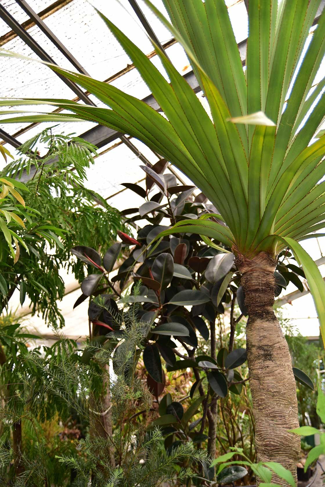 叢の植物展