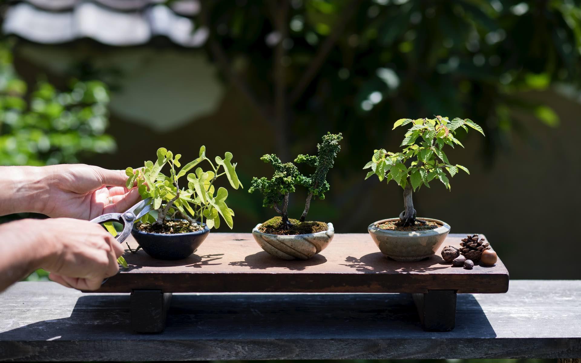 自分好みのひと鉢を作ろう。「自由な盆栽」を目指す塩津植物研究所へ