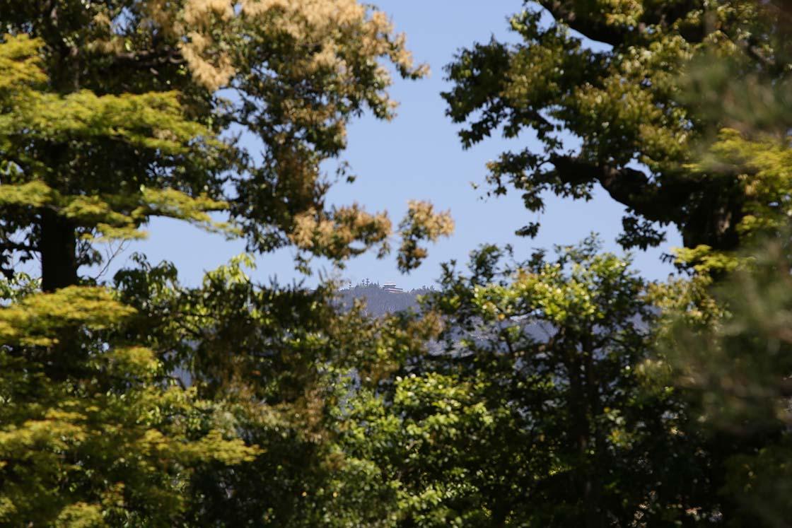 高い木立の向こうに、うっすらと東山が覗きます