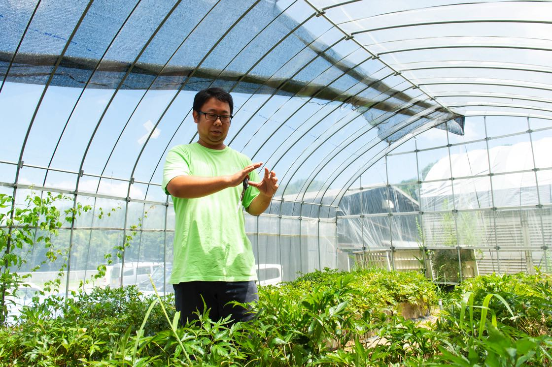 たくましく育った2年もの、3年ものの大和当帰葉の栽培、加工を担当している保科さん。「蒔いた種が育ってきましたね」
