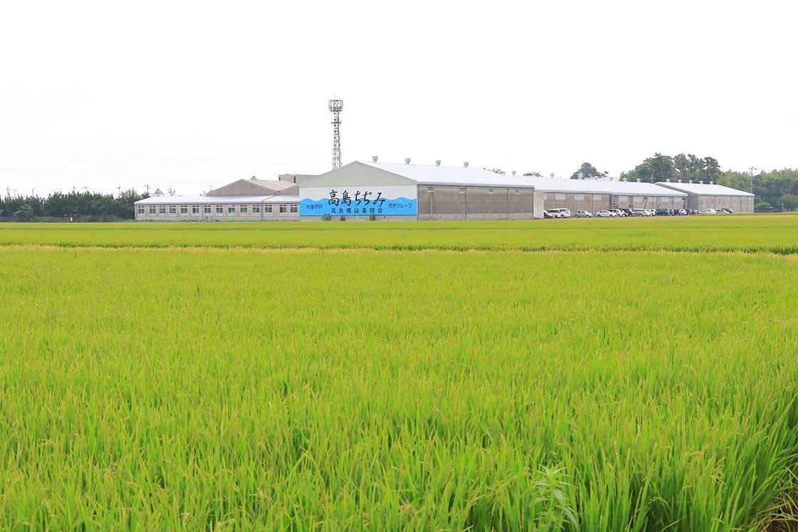 高島晒協業組合の工場。ちぢみ加工、精練漂白、染め加工まで一手に担う