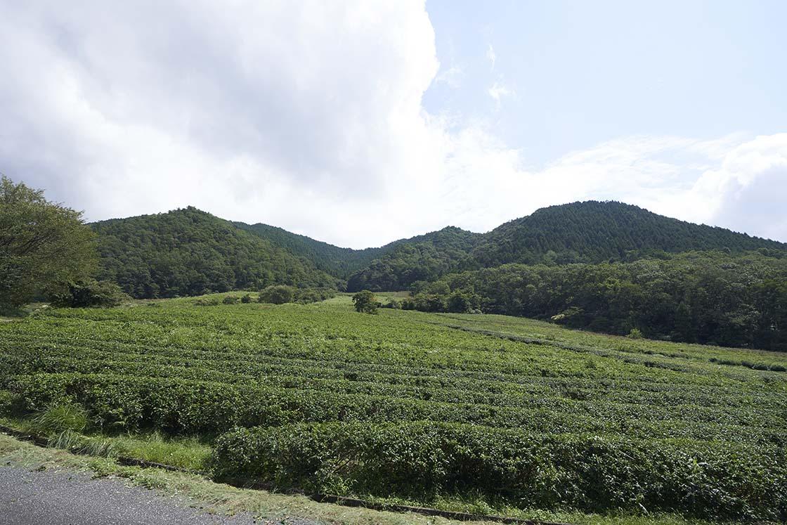 野村さんの農園の一部