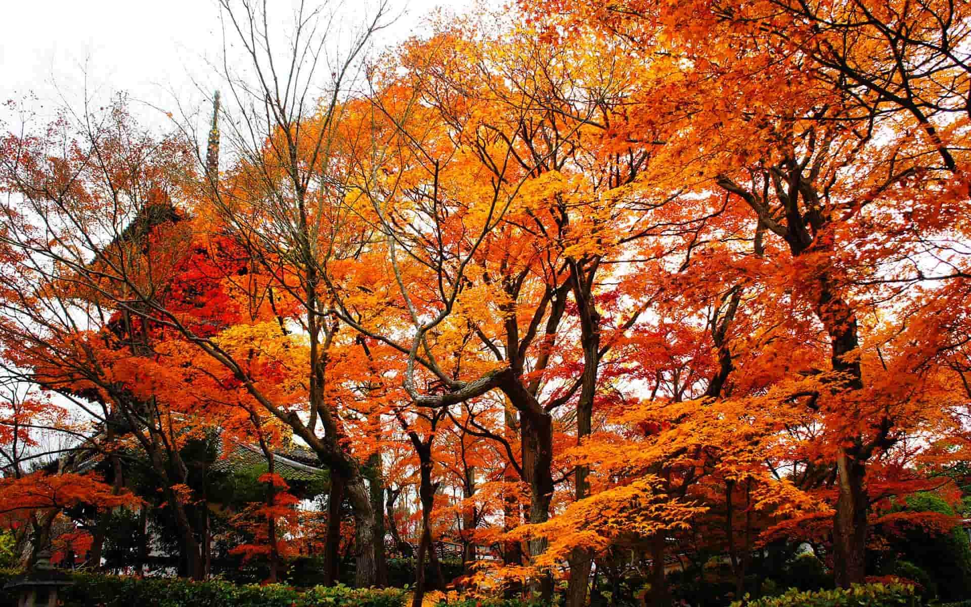 京都の紅葉は小さな美術館が穴場。混雑を避けて楽しむ、12月の賢い巡り方
